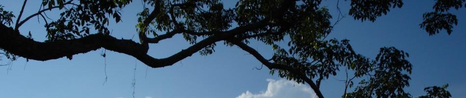 Canopy Arthropod Biology & Publications | Canopy Arthropod Biology